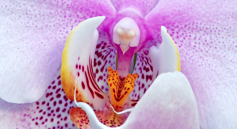 Wtreme_CU Orchid