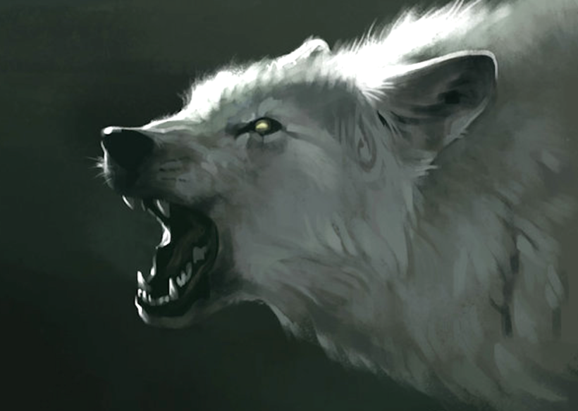 white wolf growl moonlight