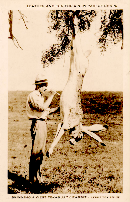 Rabbit skinning Texas