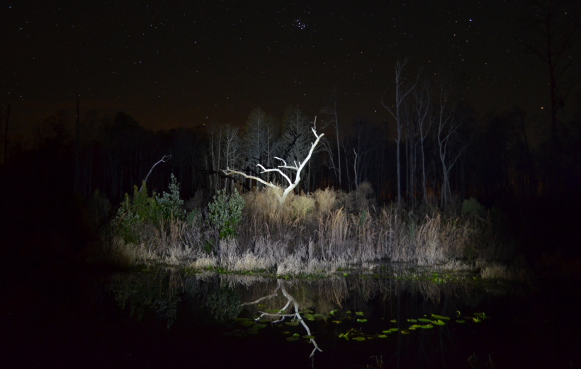 swamp at night dead white tree